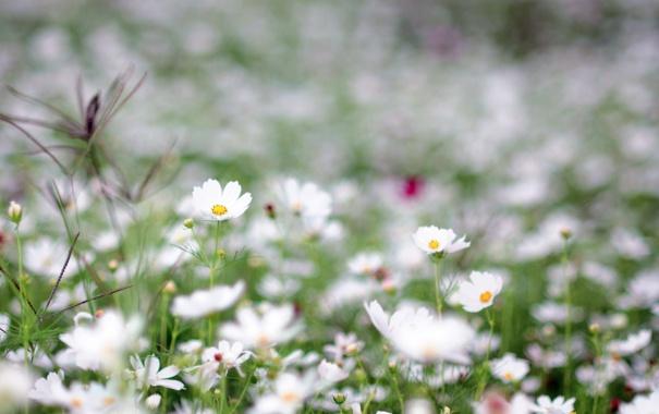 Фото обои зелень, поле, трава, цветы, природа, поляна, нежность