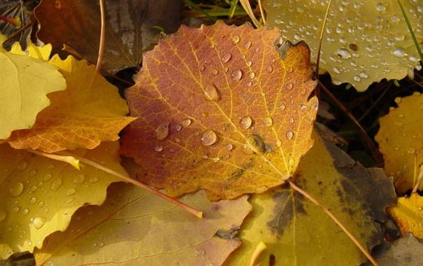 Фото обои листья, желтый, Осень, оранжевый, капельки