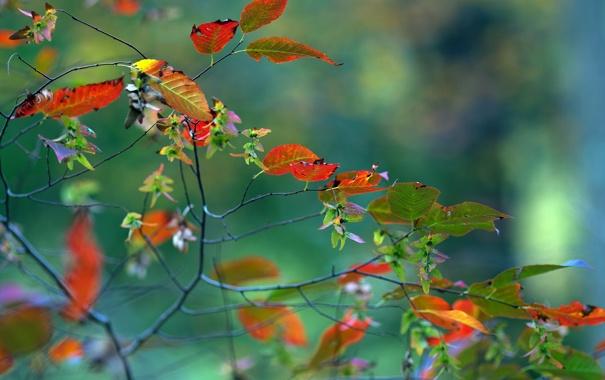 Фото обои осень, листья, макро, ветка