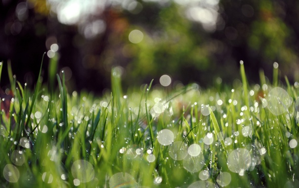 Фото обои трава, капли, макро, роса, блики, утро