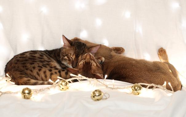 Фото обои шарики, кошки, коты, гирлянда, спят, бенгальский