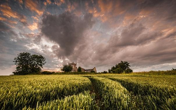 Фото обои поле, деревья, замок, развалины, колосья