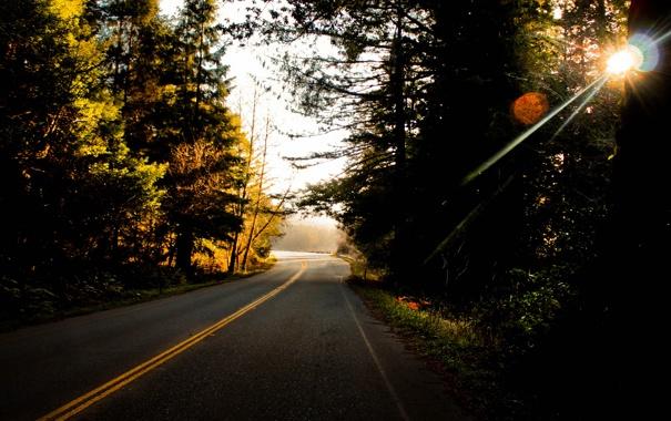 Фото обои дорога, лес, деревья, полосы