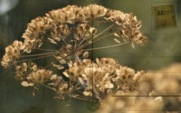 Фото обои цветок, стиль, фон
