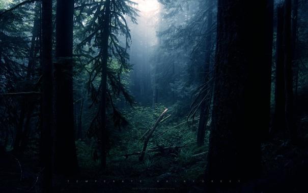 Фото обои лес, темно, чаща, грег мартин, таинственно