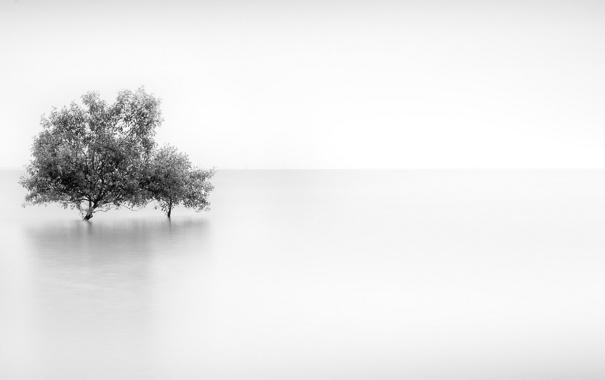 Фото обои деревья, туман, фон