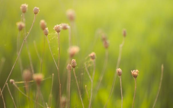 Фото обои природа, цвет, травы