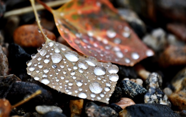Фото обои листья, капли, камни