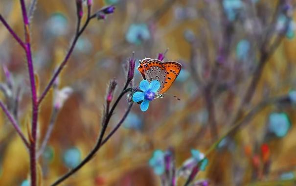 Фото обои макро, цветы, бабочка, насекомое