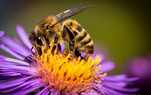 Фото обои цветок, макро, пчела, пыльца