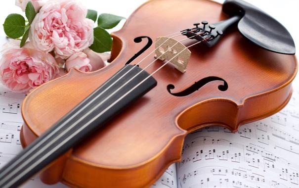 Фото обои цветы, ноты, скрипка, розы, музыкальный инструмент