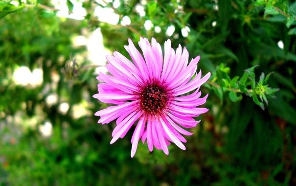 Фото обои Цветы, лучшее, красивое фото
