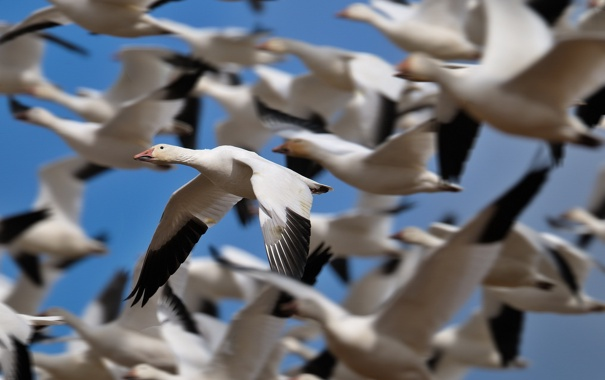Фото обои небо, птицы, природа