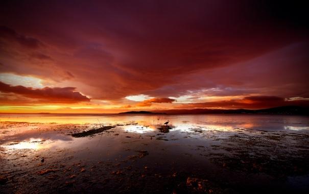 Фото обои море, небо, вода, тучи, озеро, птица, залив