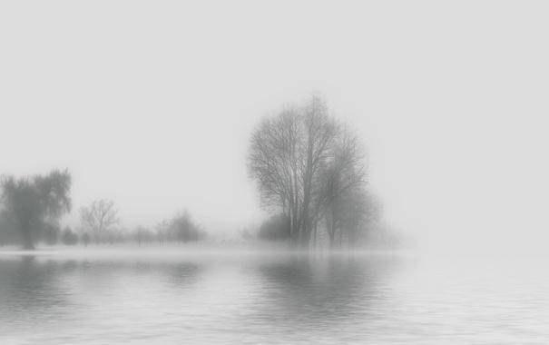 Фото обои вода, деревья, туман, фон, силуэты