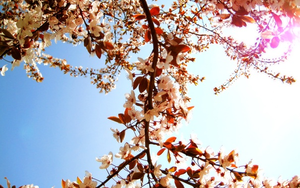 Фото обои солнце, цветы, ветки, природа, дерево, лепестки, день