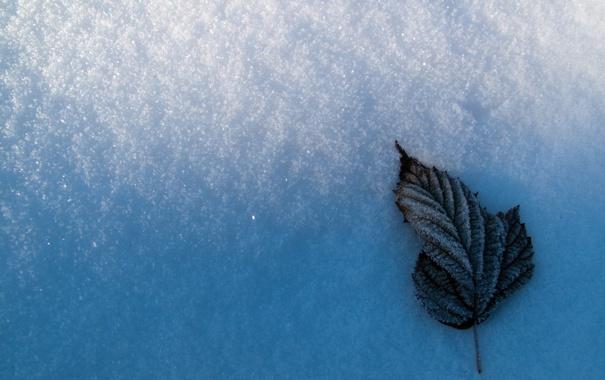 Фото обои зима, снег, лист, frozen leaf