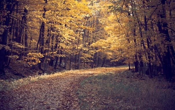 Фото обои дорога, осень, лес, листья, деревья, пейзаж, природа