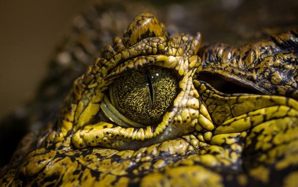 Фото обои макро, глаз, крокодил