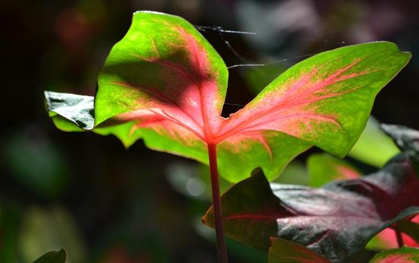 Фото обои природа, лист, растение, паутина