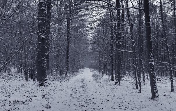 Фото обои дорога, лес, снег, деревья, Зима