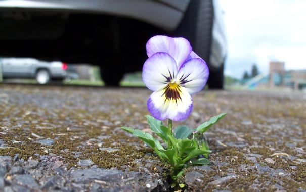 Фото обои дорога, цветок, город, обочина