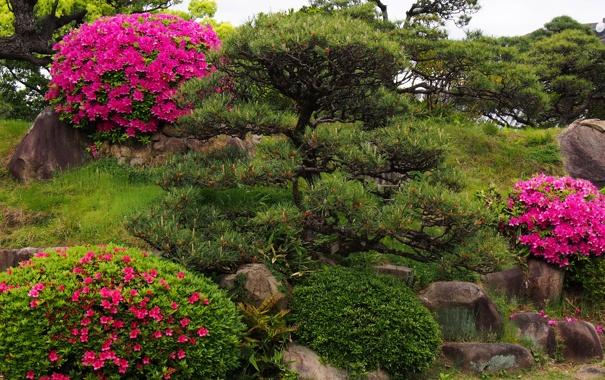 Фото обои цветы, парк, камни, сад, кусты, рододендрон