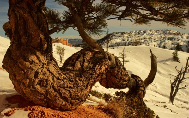 Фото обои mountains, snow, tree
