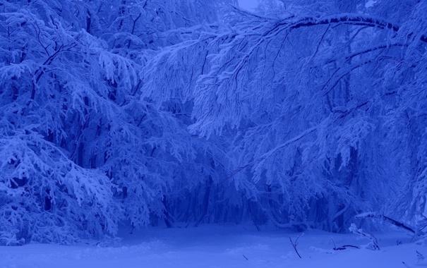Фото обои зима, лес, снег, деревья, мороз