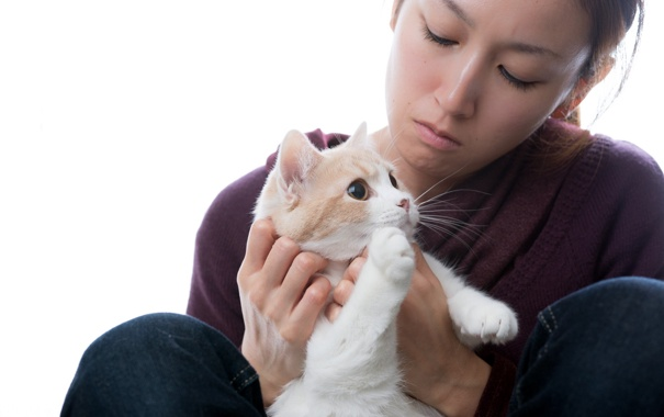 Фото обои кошка, фон, девочка, torode