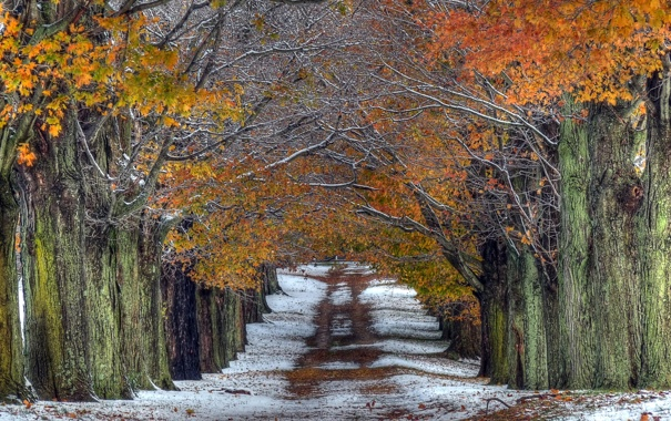 Фото обои дорога, деревья, природа