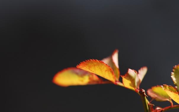 Фото обои листья, макро, природа, фото, обои, растения