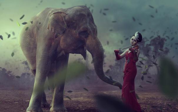 Фото обои скрипка, фантазия, арт, девушка, слон, Earth Music