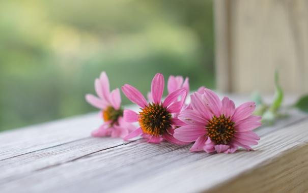 Фото обои макро, цветы, окно
