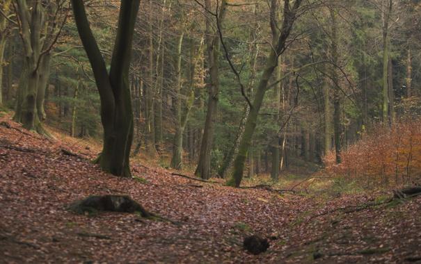 Фото обои осень, лес, деревья, природа, фото, листва