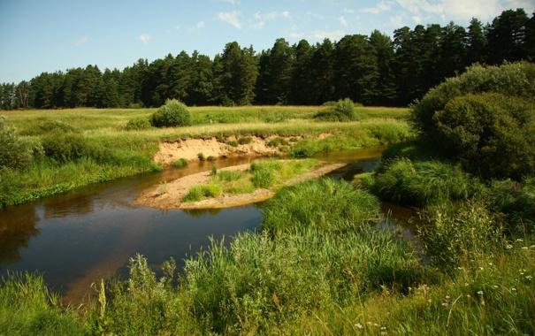 Фото обои лес, небо, трава, природа, река, прогулка, кава
