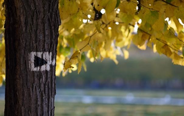Фото обои осень, природа, дерево