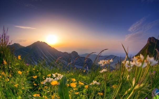 Фото обои цветы, горы, весна, луг
