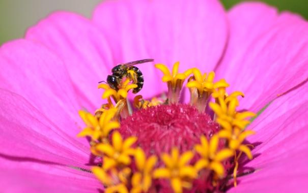 Фото обои лето, цветы, насекомые, природа, жизнь, флора