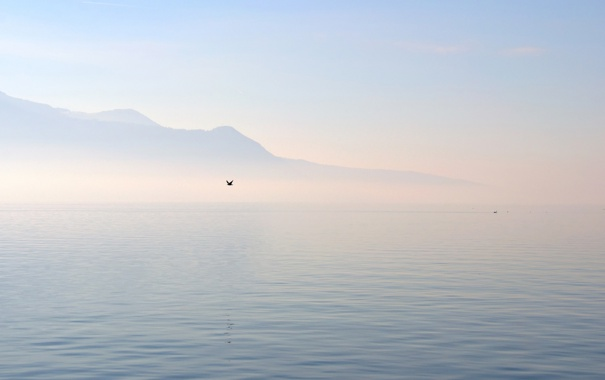 Фото обои море, туман, озеро, холмы, птица