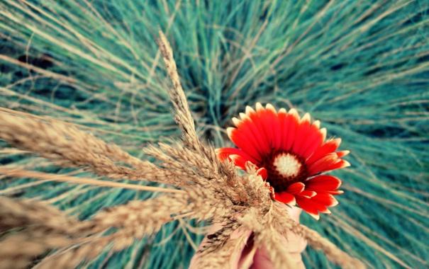 Фото обои макро, цветы, ярко