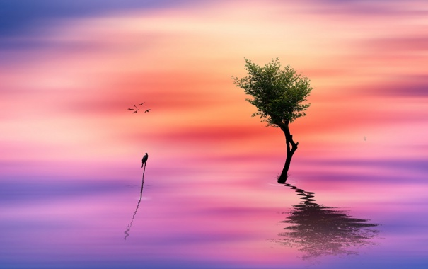 Фото обои дерево, птица, цвет