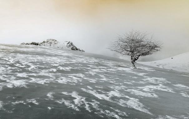 Фото обои небо, снег, пейзаж, дерево