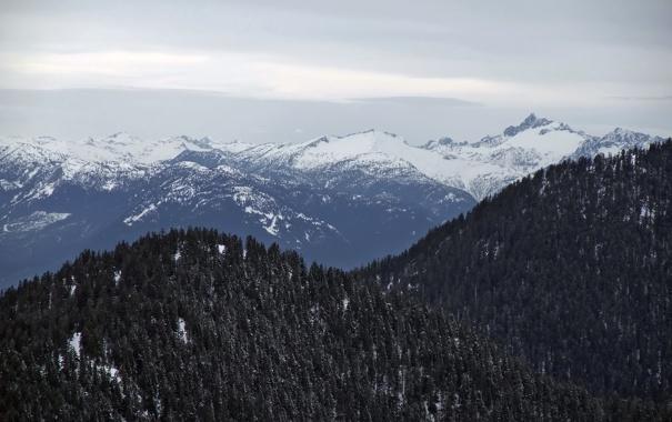 Фото обои лес, деревья, горы, хвоя