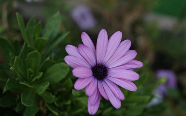 Фото обои цветок, макро, макросьемка, Цветы