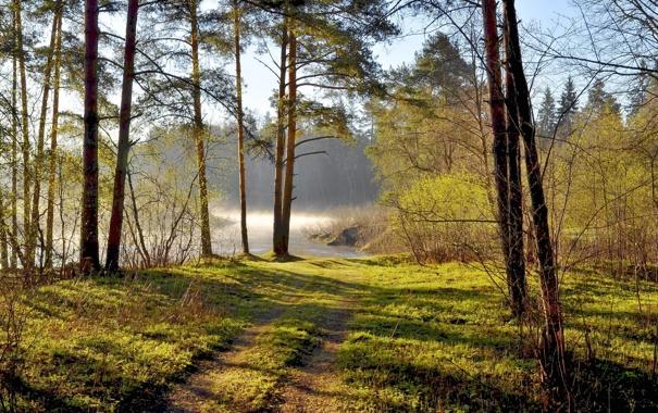 Фото обои лес, лето, пейзаж
