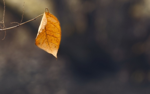 Фото обои осень, природа, лист