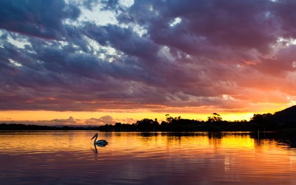 Фото обои небо, вода, солнце, облака, деревья, пейзаж, закат