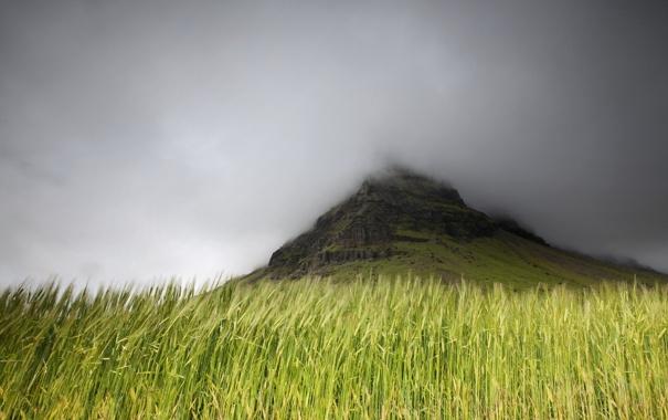 Фото обои поле, природа, туман, гора