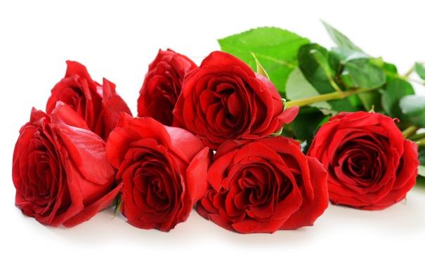 Картинки цветы розы красные